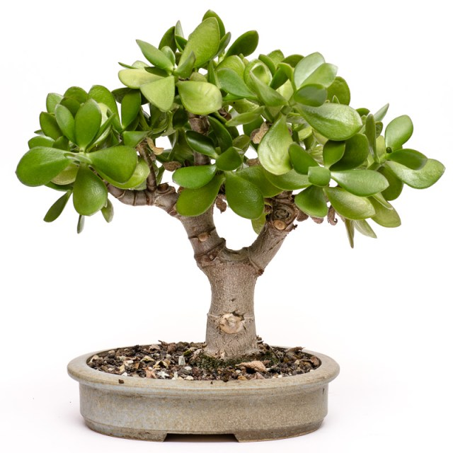 Cazino,Noroc,Bambus,Plante,Trifoi,Orhidee,Bogatii,avere,Maxbet,Blog,Prosperitate